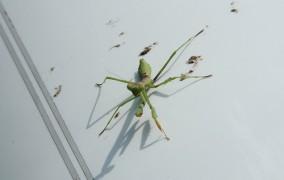 Ako odstrániť zaschnutý hmyz na aute?