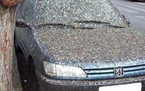 Nepodceňujte vtáčí trus ani zaschnutý hmyz na vozidle